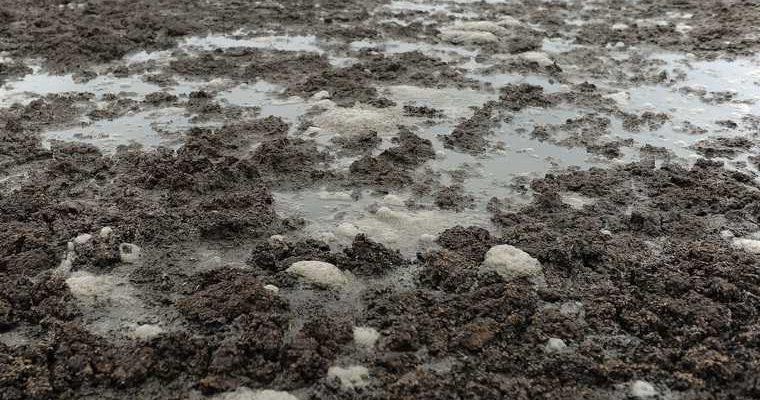 Аксарка массовое отравление жителей вода бактерии калофаги