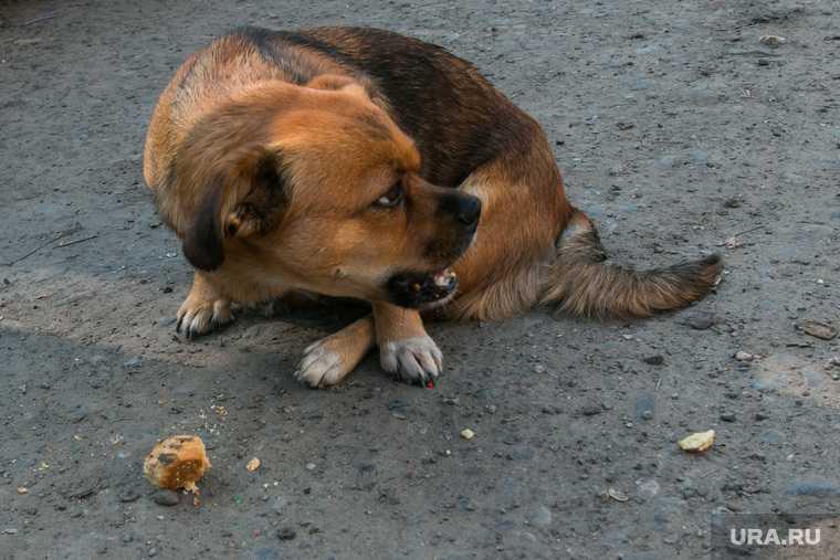 как разобраться с бездомными собаками
