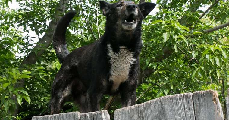 Тюменцы не могут попасть на детскую площадку из-за агрессивных собак