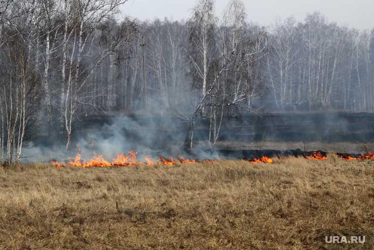 предупреждение пожары Россия Москва лес