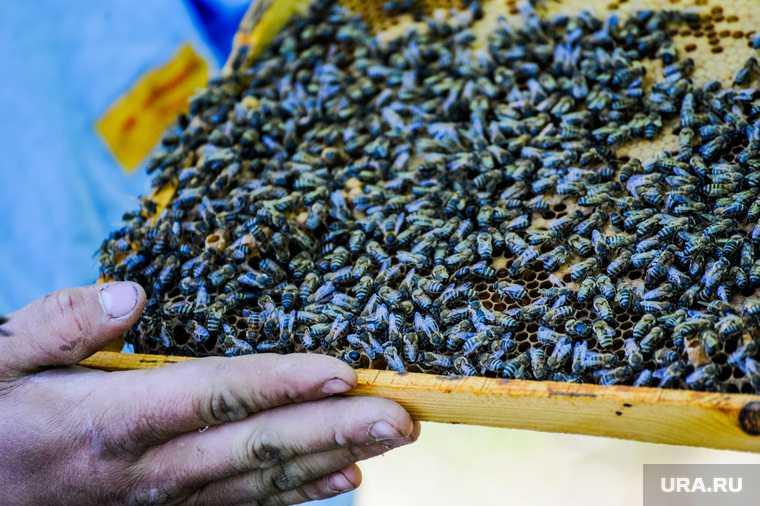 фермеры иск правительство РФ пчеловоды